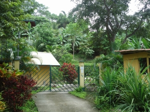 casa mango & casa papaya