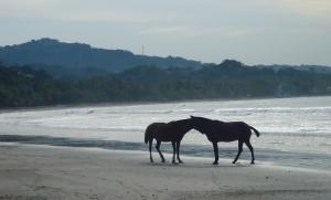 horses samara beach