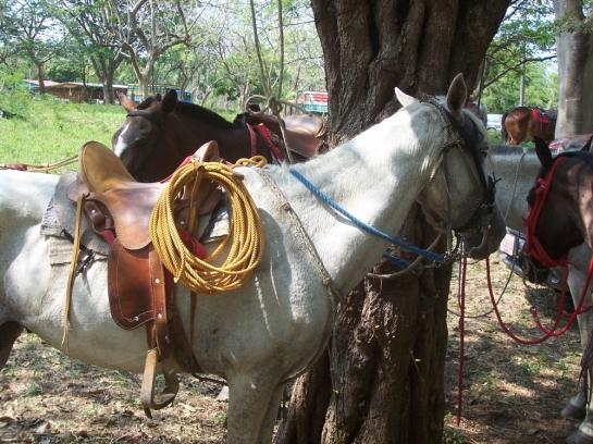 costa rica horses