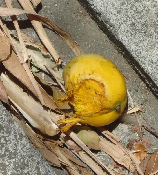 eat mango
