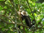 Corcovado National Park is one of the largest and most biologically diverse reserves in Costa Rica.