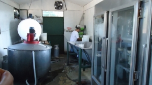 goat milk producer in costa rica