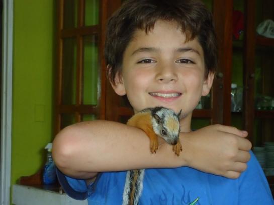alfaro's pygmy squirrel