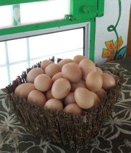 farm fresh eggs playa samara costa rica