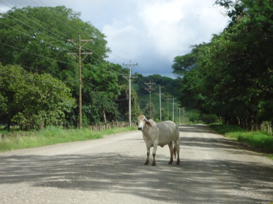 road hazards in costa rica