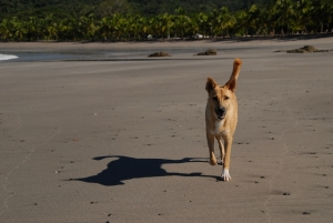 adopt a dog in costa rica