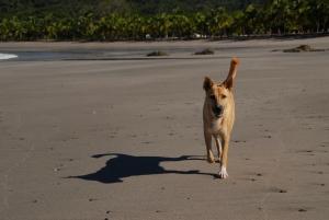 adopt a dog in costa rica