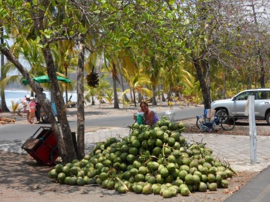green coconuts for sale in costa rica