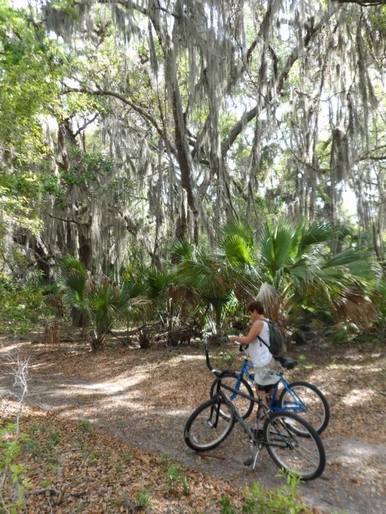 bicycling cumberland island