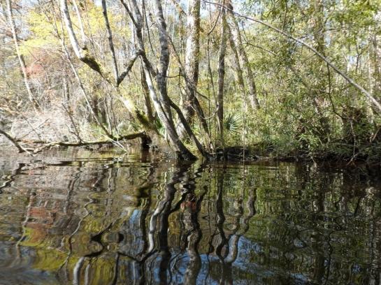 wambaugh creek