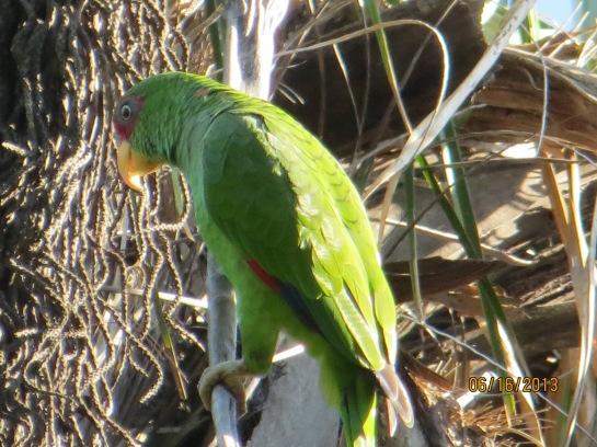 bird watching costa rica