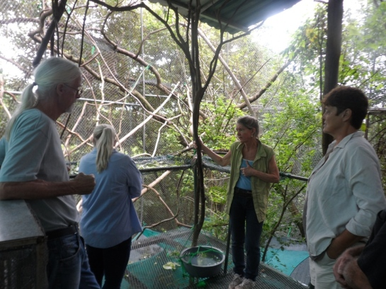 saving howler monkeys