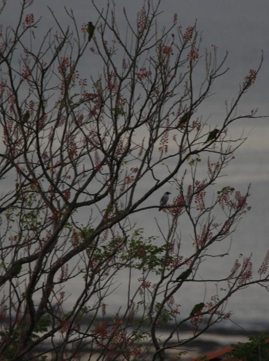 parrots fill the tree