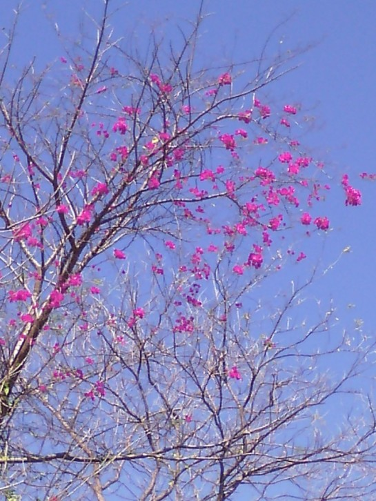 a- boug flor