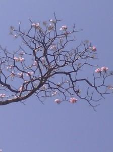 a- roble flor
